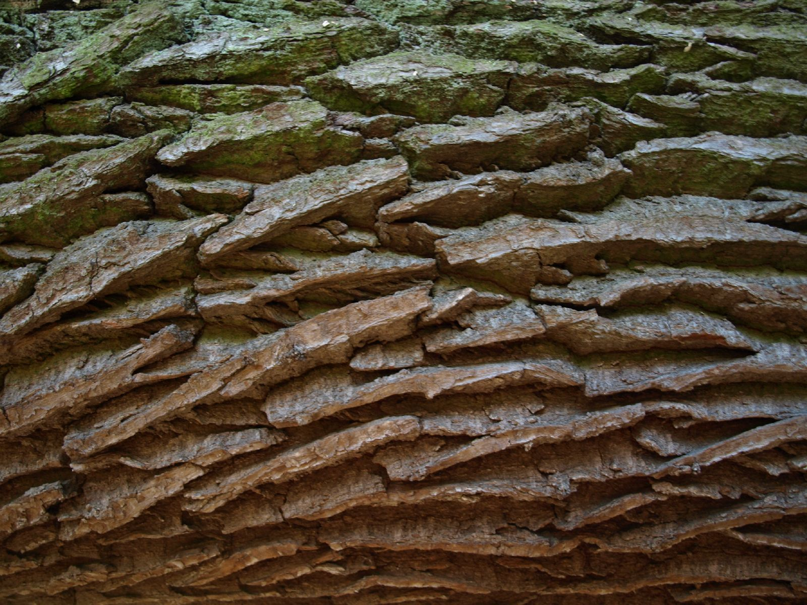 Baum-Rinde_Textur_A_PA256338