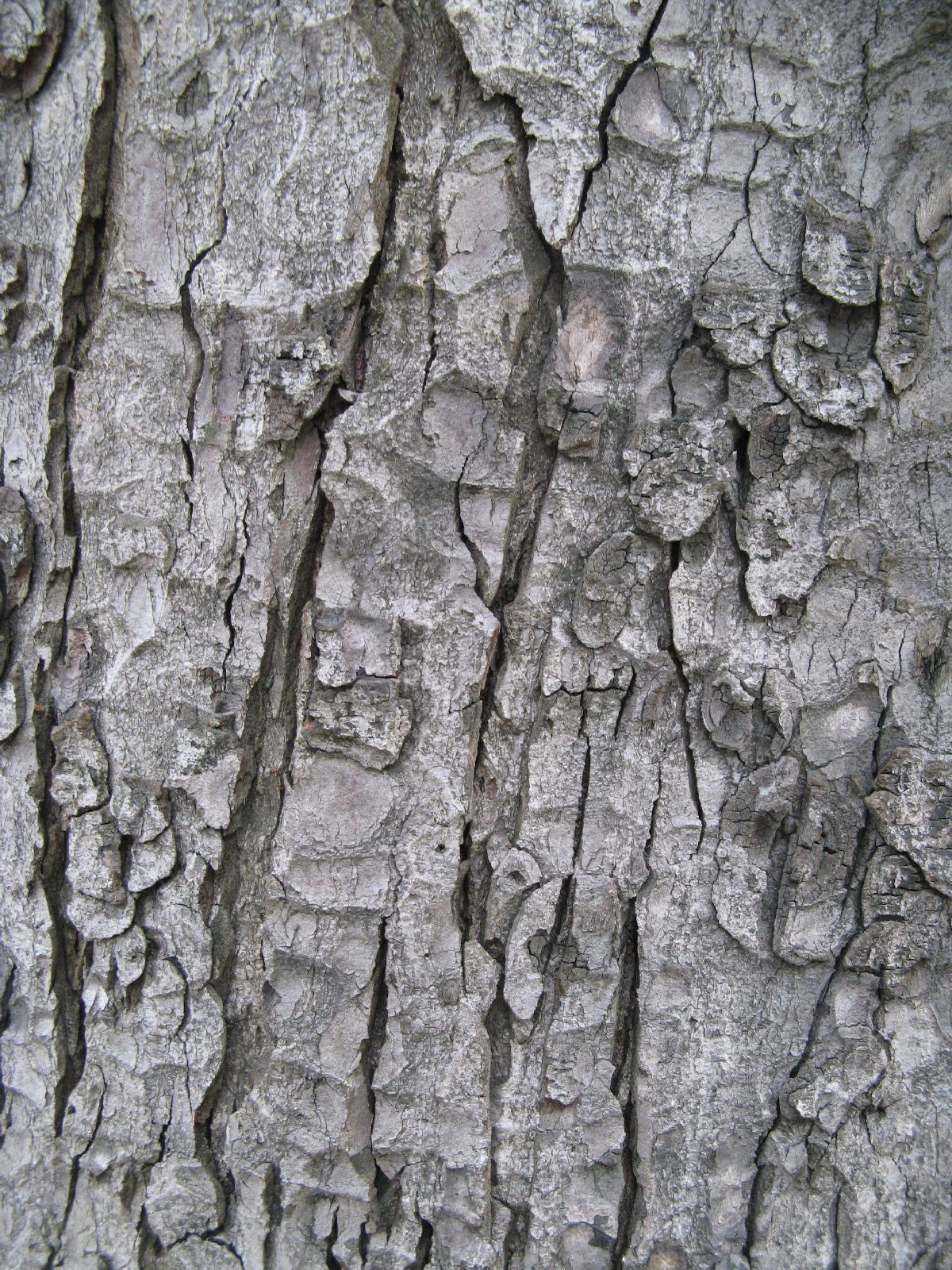 Baum-Rinde_Texturs_B_09210