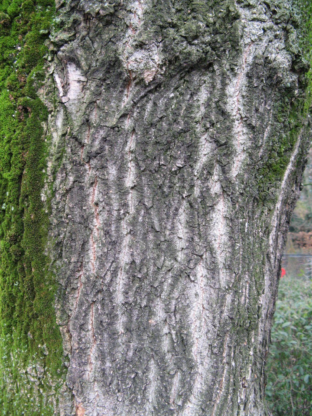 Baum-Rinde_Texturs_B_23800