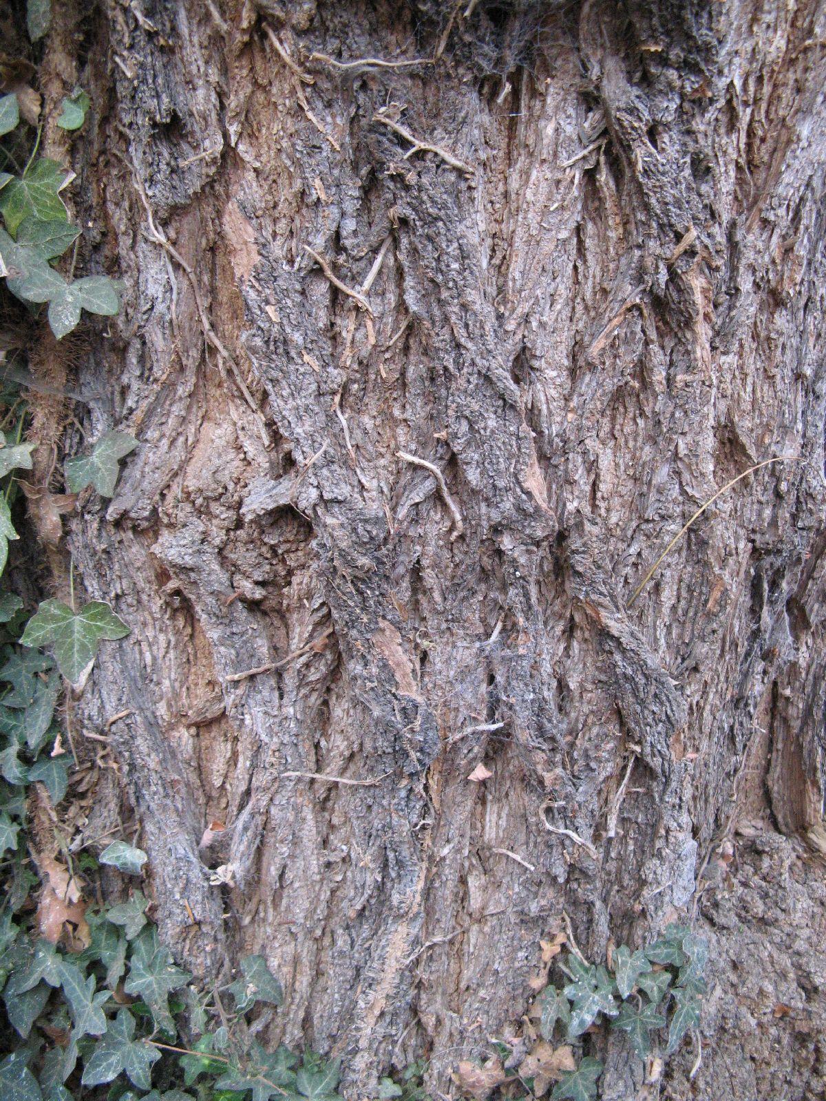 Baum-Rinde_Texturs_B_24700