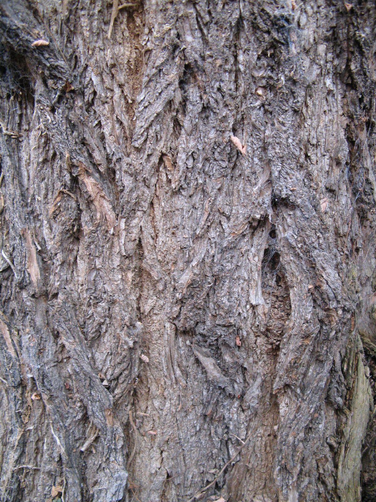 Baum-Rinde_Texturs_B_24710
