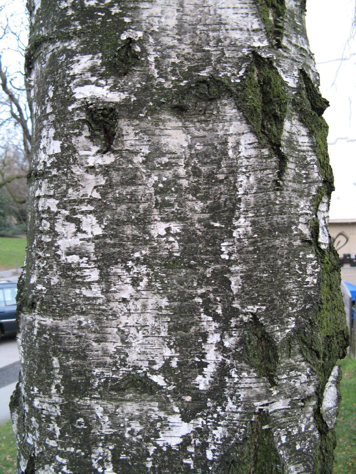 Baum-Rinde_Texturs_B_25680