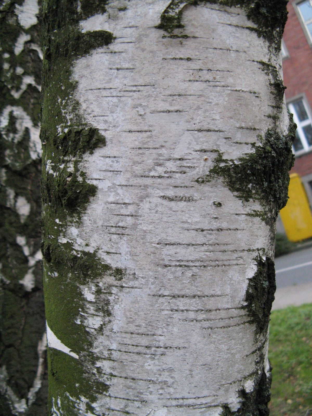 Baum-Rinde_Texturs_B_25710