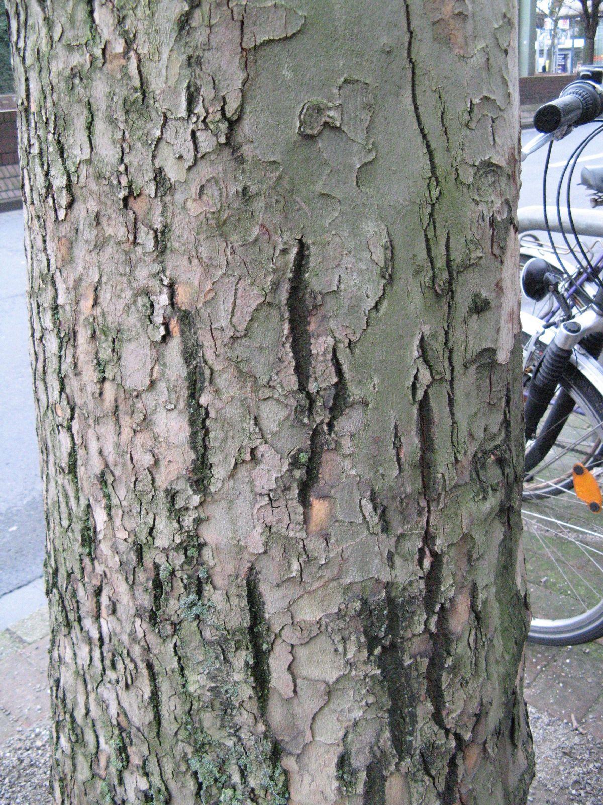Baum-Rinde_Texturs_B_26330