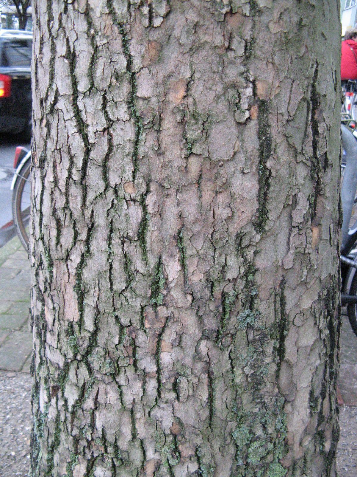 Baum-Rinde_Texturs_B_26340
