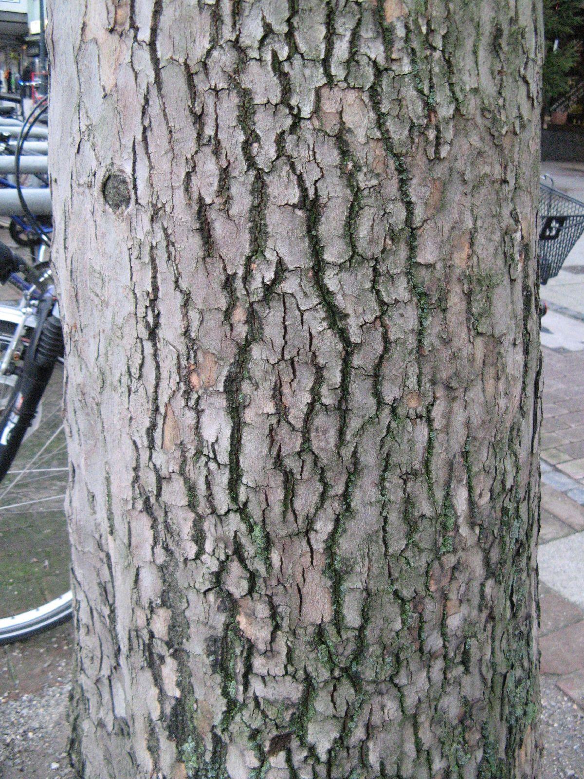 Baum-Rinde_Texturs_B_26350