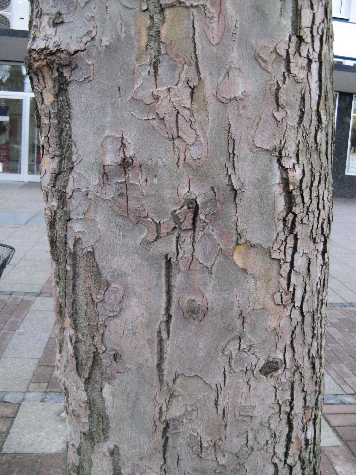 Baum-Rinde_Texturs_B_26360