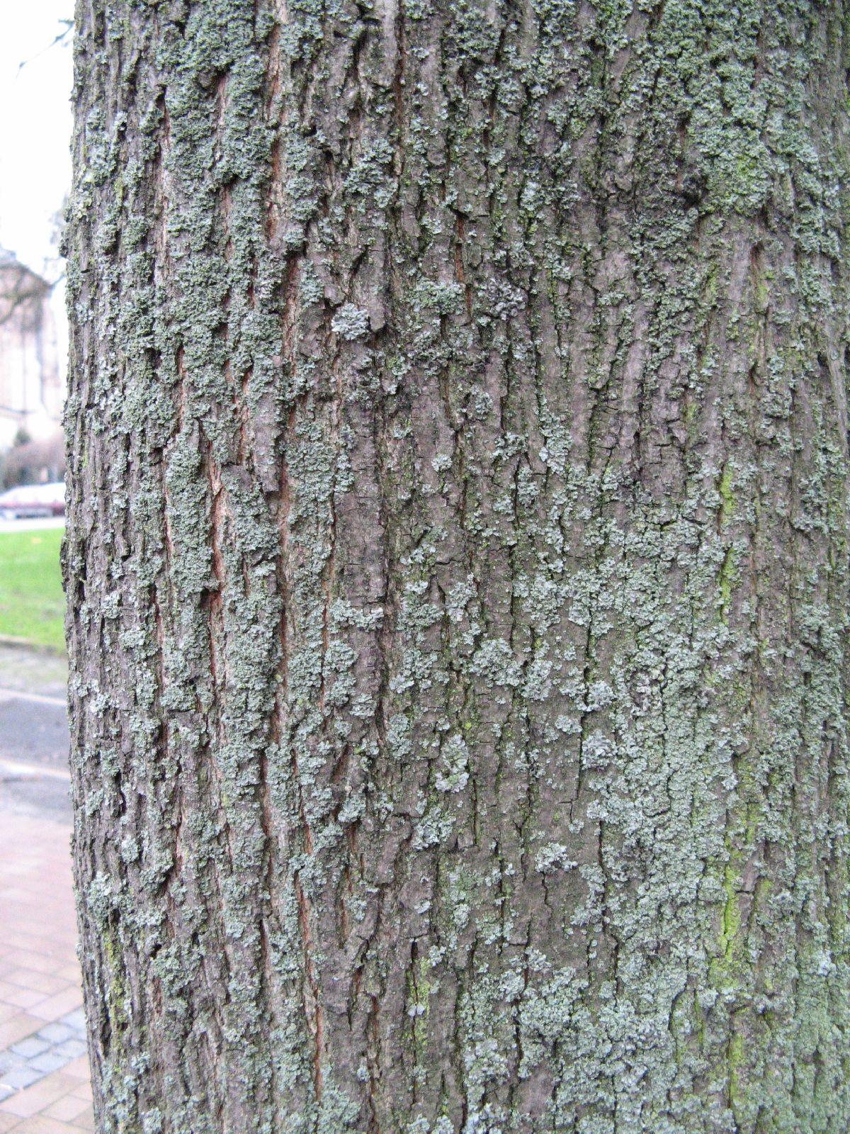 Baum-Rinde_Texturs_B_26800