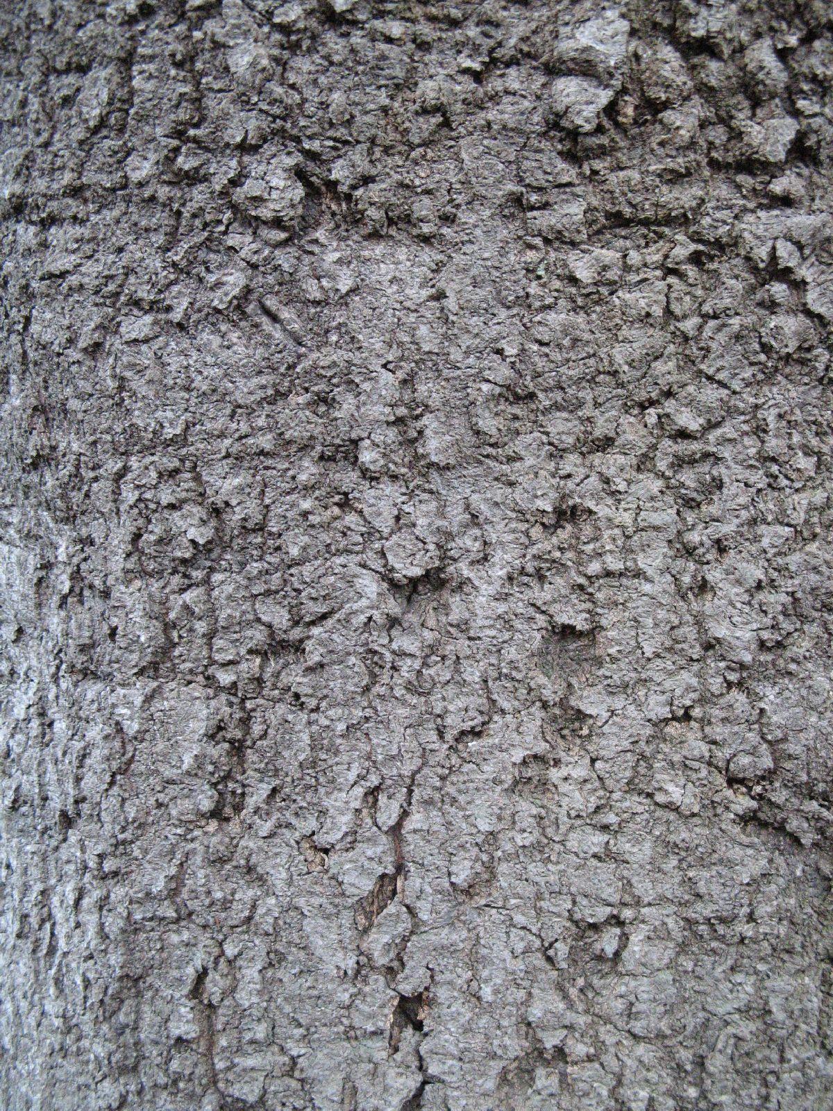 Baum-Rinde_Texturs_B_27250