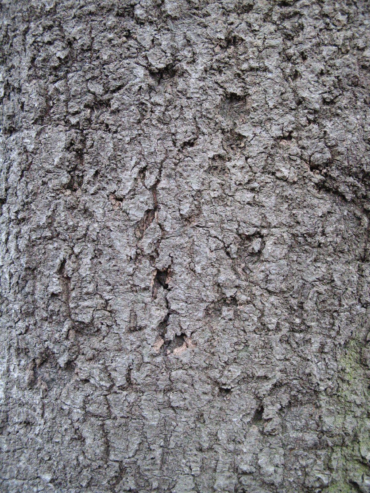 Baum-Rinde_Texturs_B_27260