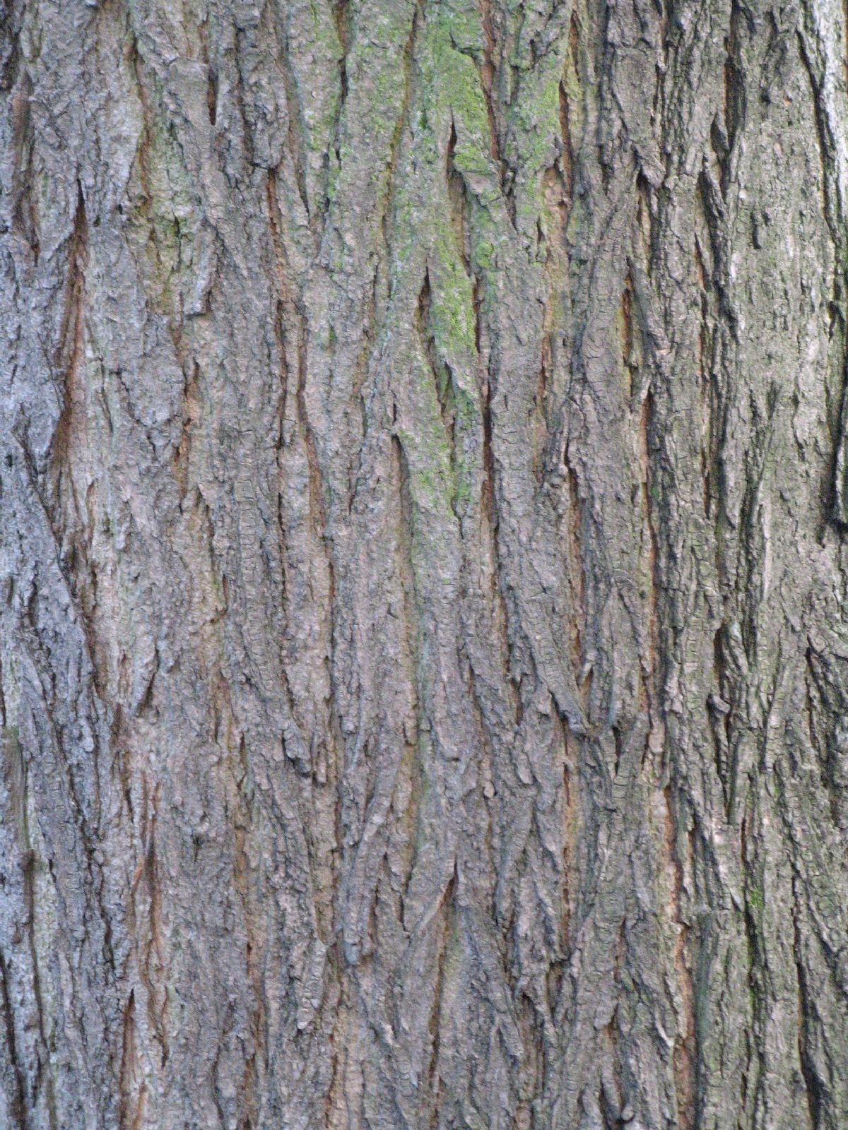 Baum-Rinde_Texturs_B_27410