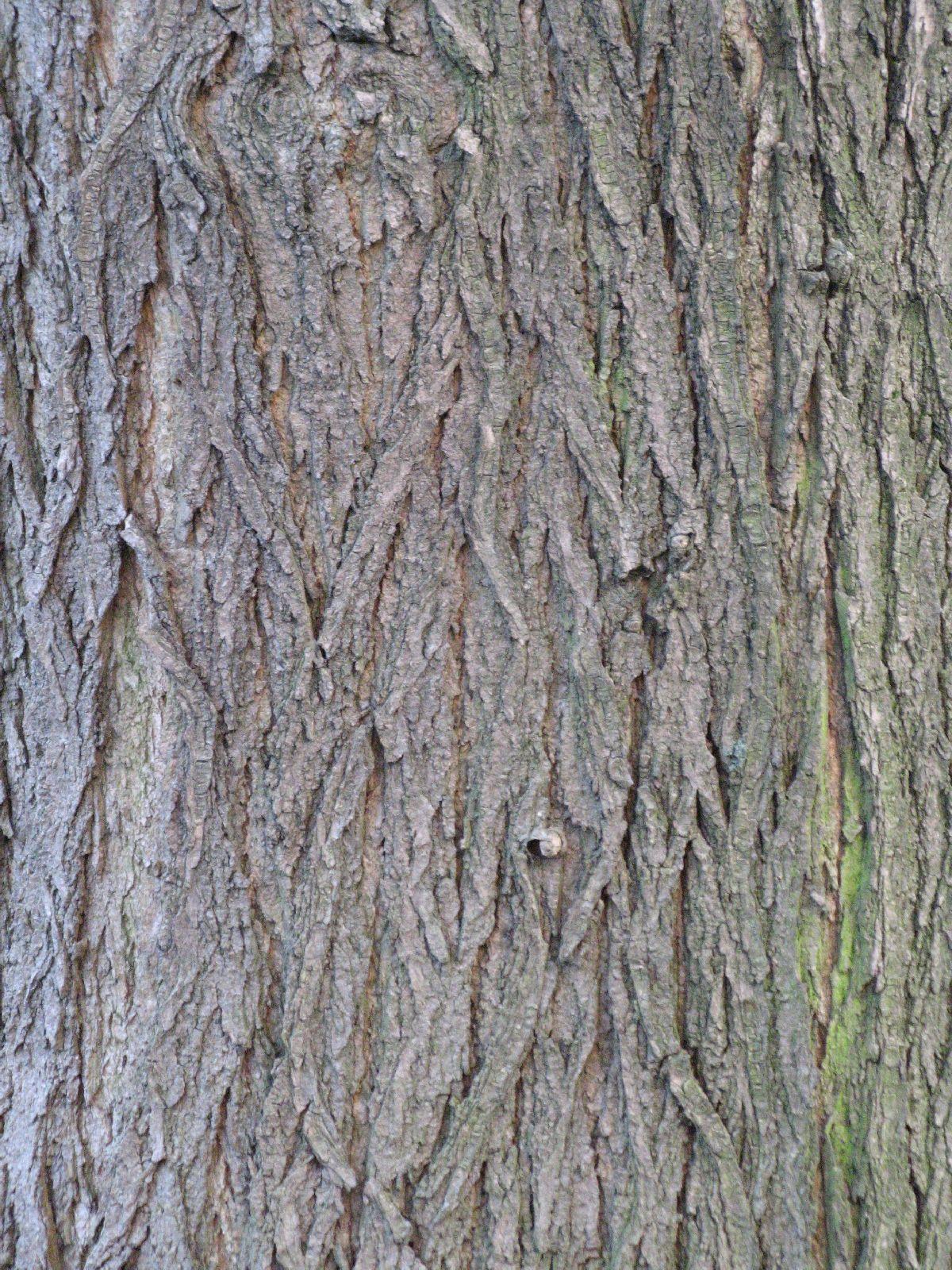 Baum-Rinde_Texturs_B_27420