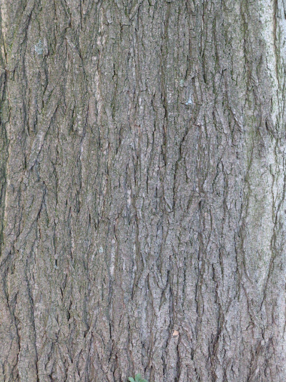 Baum-Rinde_Texturs_B_27430