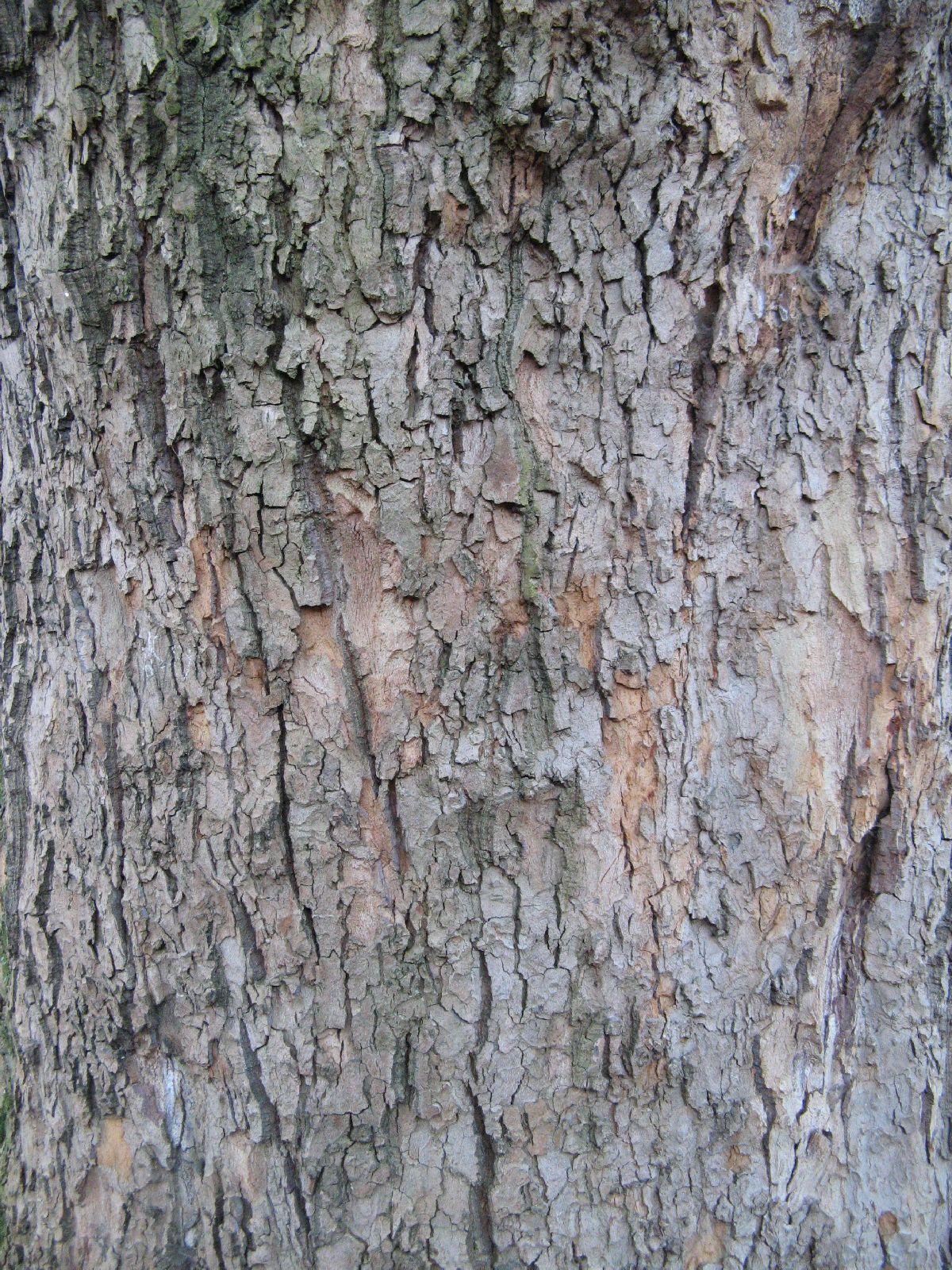 Baum-Rinde_Texturs_B_27560