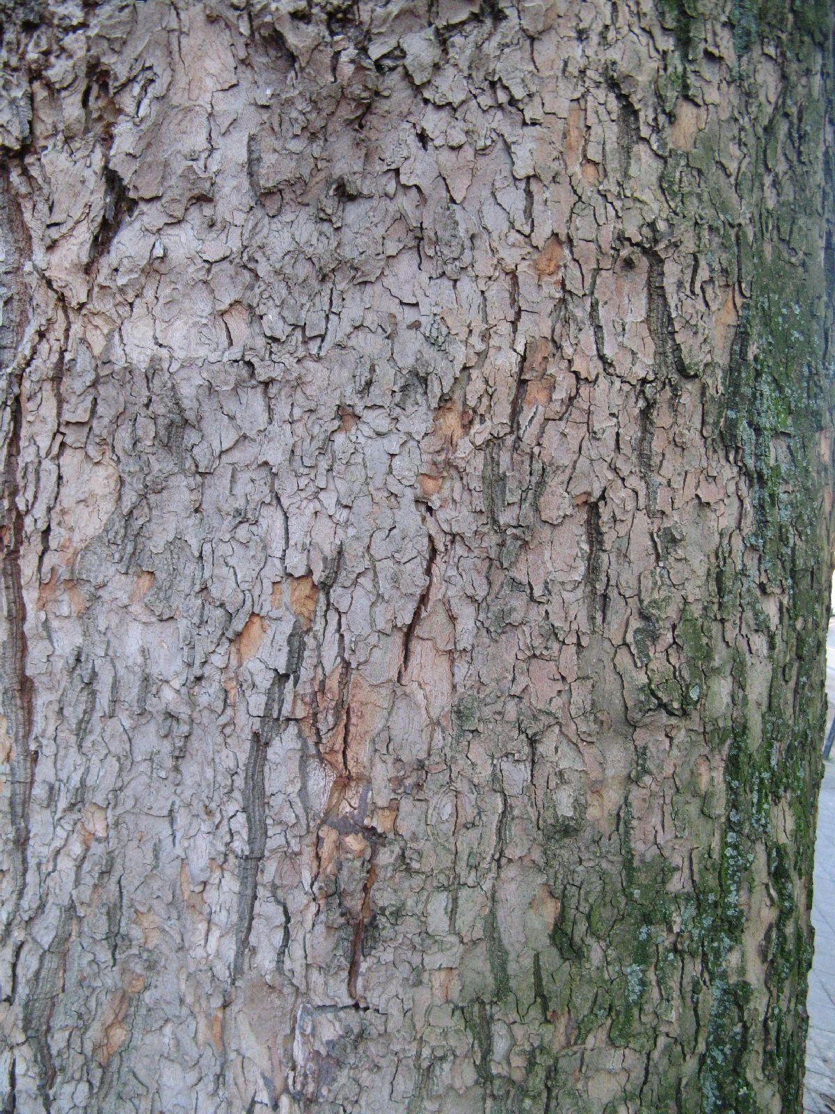 Baum-Rinde_Texturs_B_27620