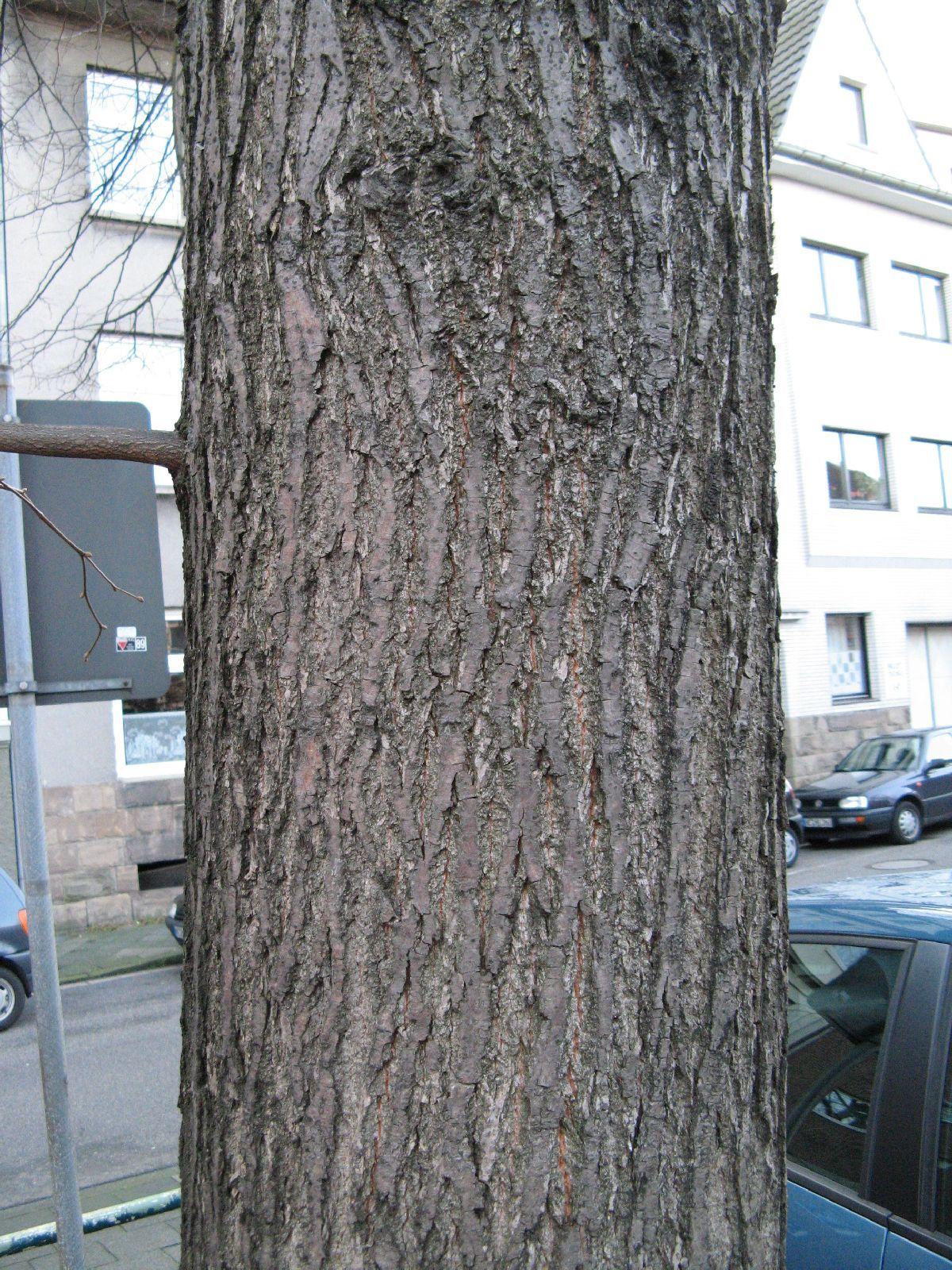 Baum-Rinde_Texturs_B_27650