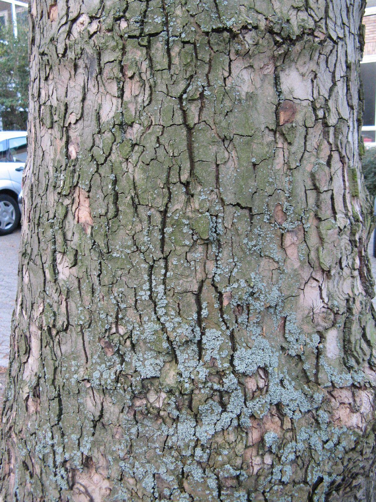 Baum-Rinde_Texturs_B_27760