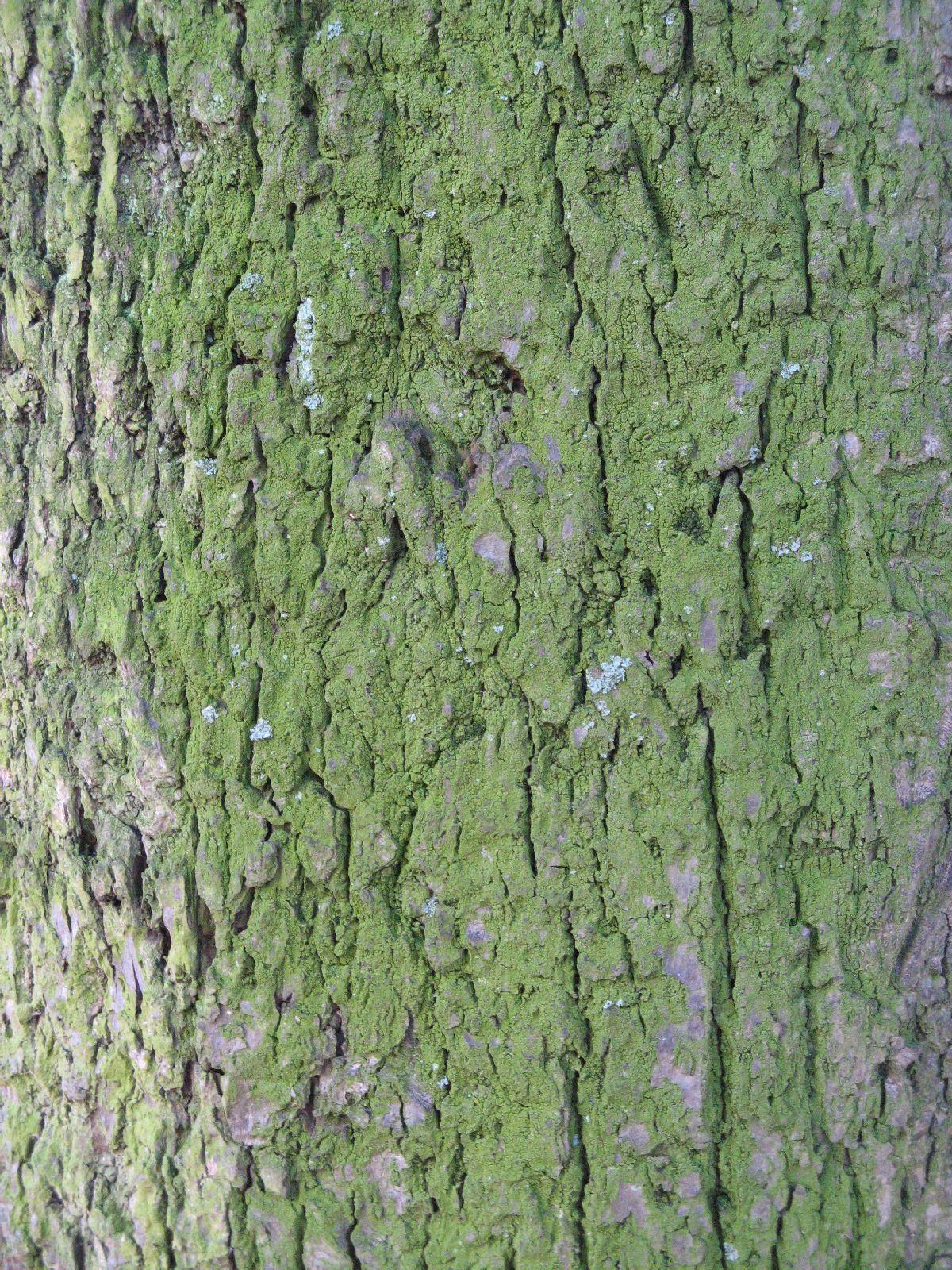 Baum-Rinde_Texturs_B_27900