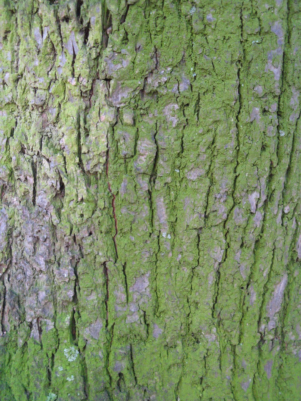 Baum-Rinde_Texturs_B_27910