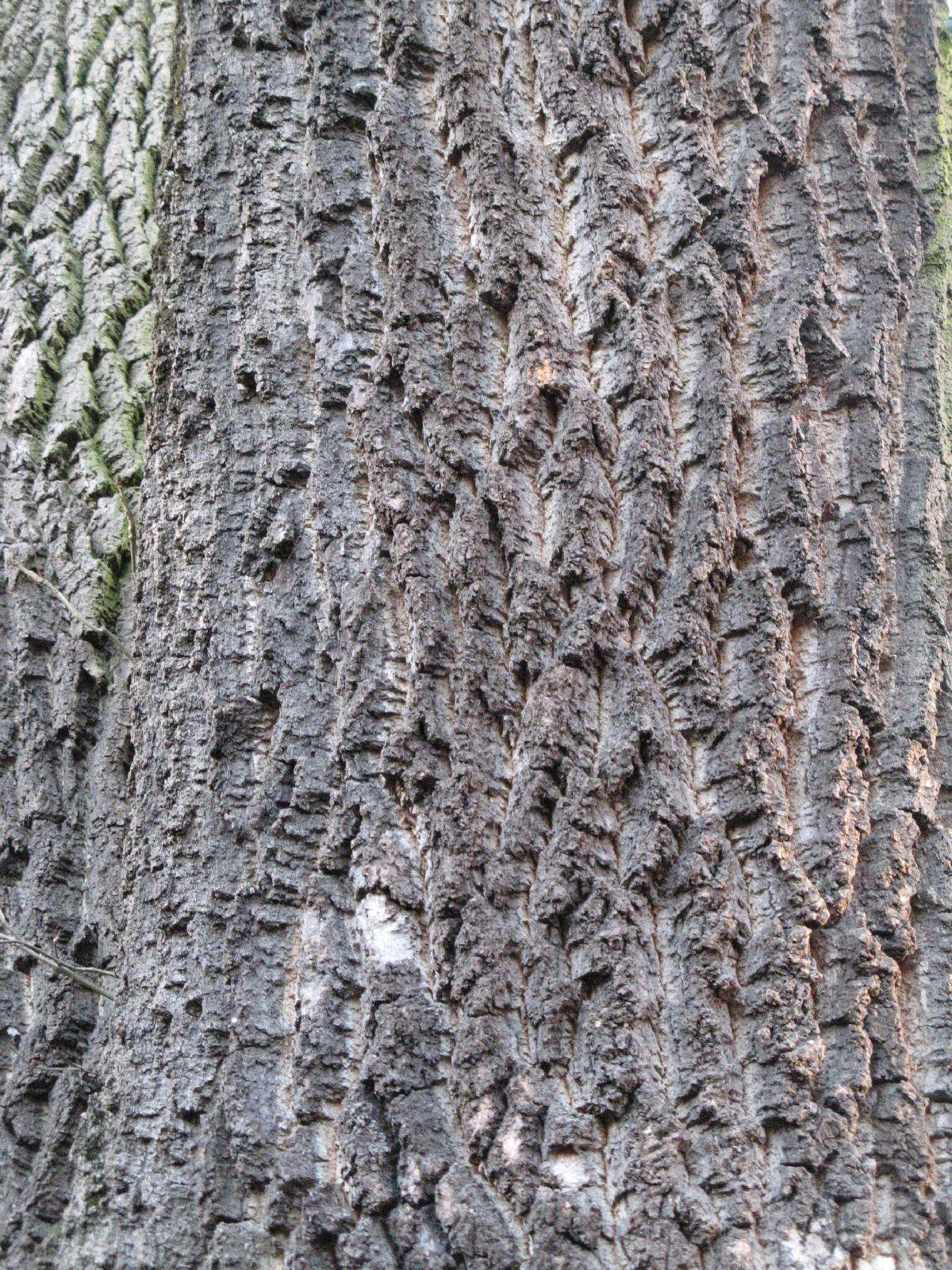 Baum-Rinde_Texturs_B_27950