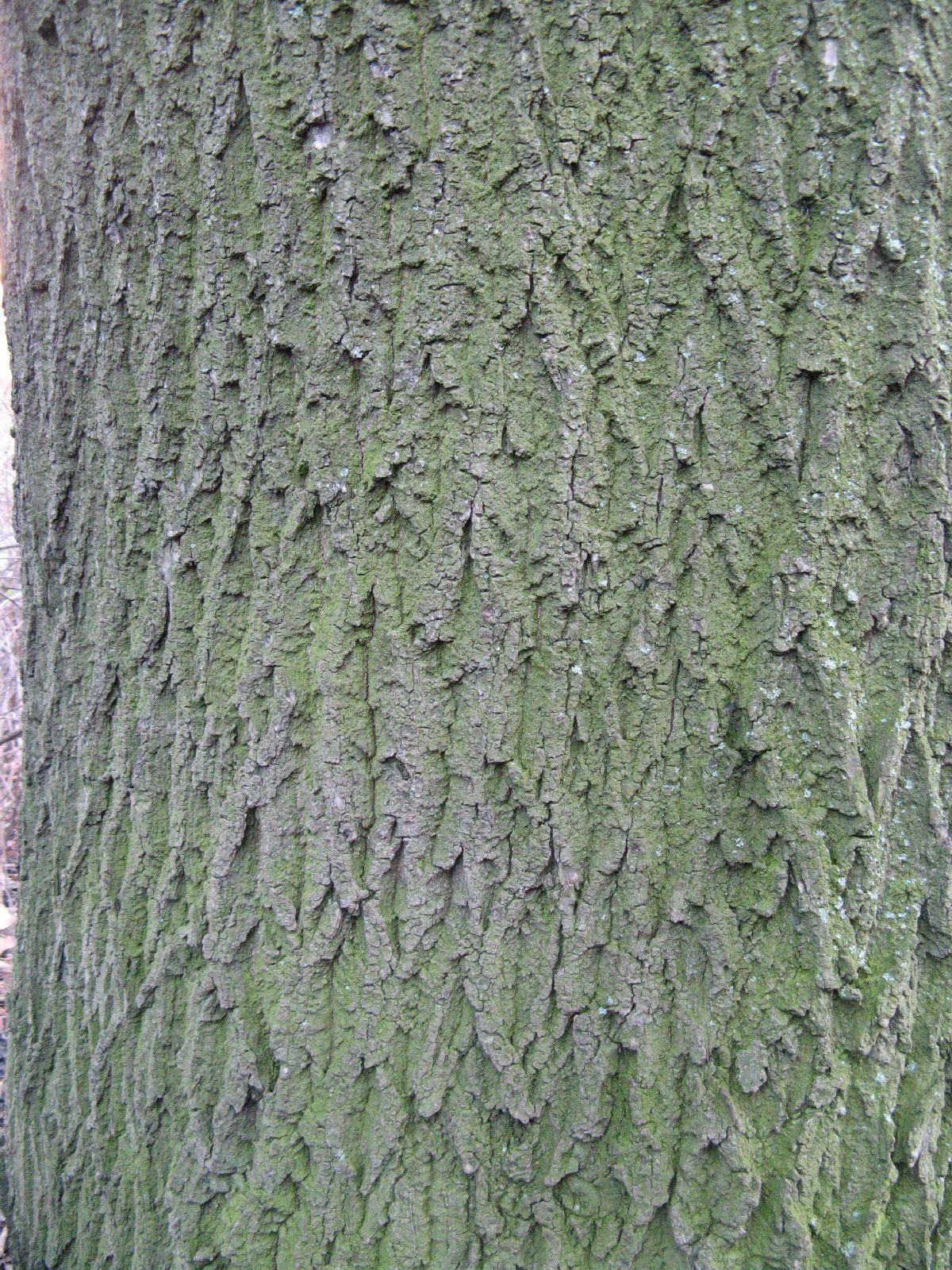 Baum-Rinde_Texturs_B_27970