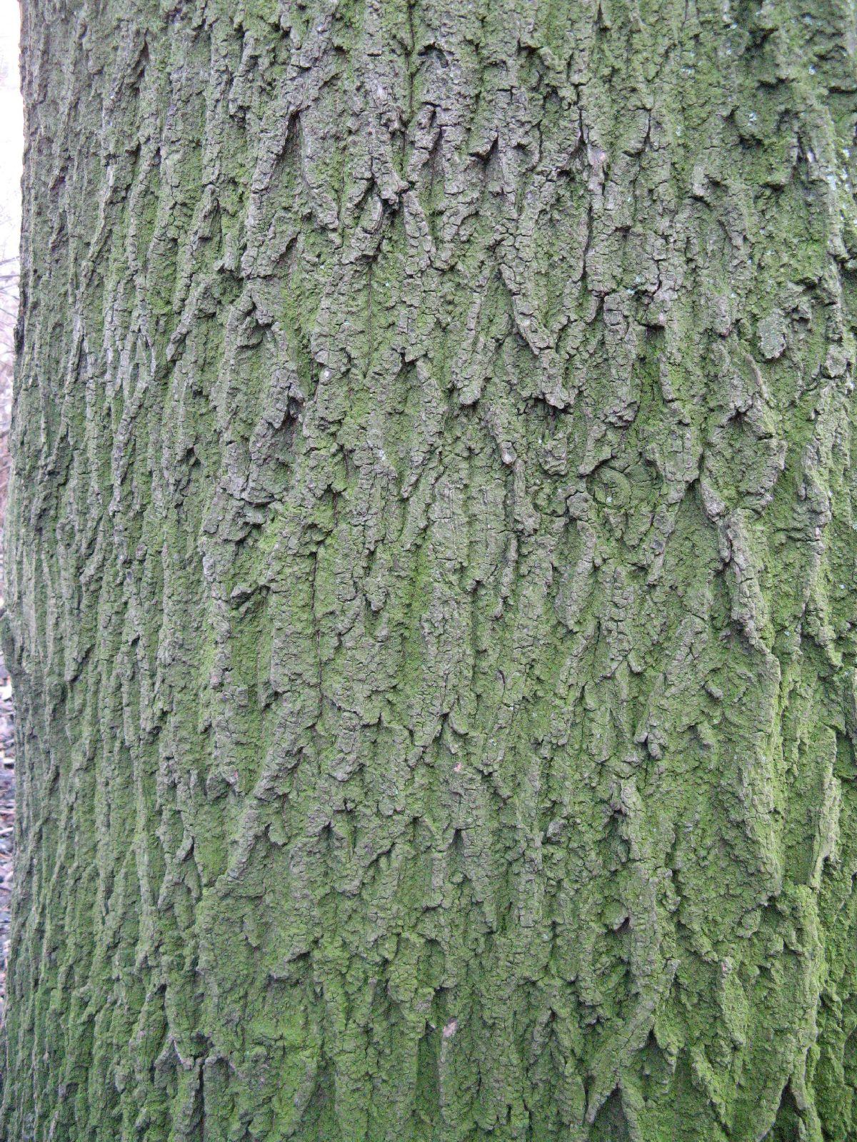 Baum-Rinde_Texturs_B_27980