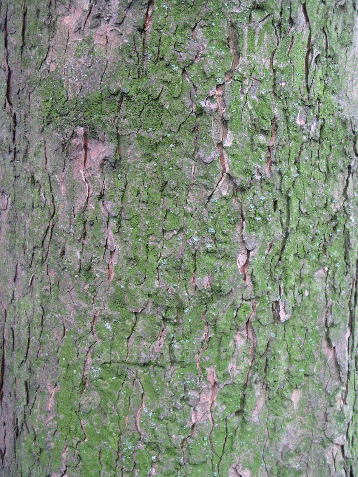 Baum-Rinde_Texturs_B_28020