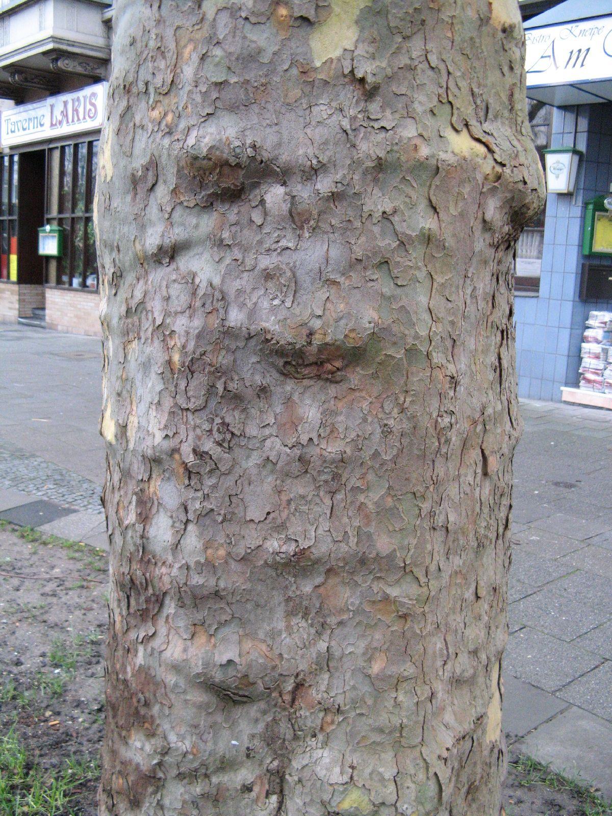 Baum-Rinde_Texturs_B_28590