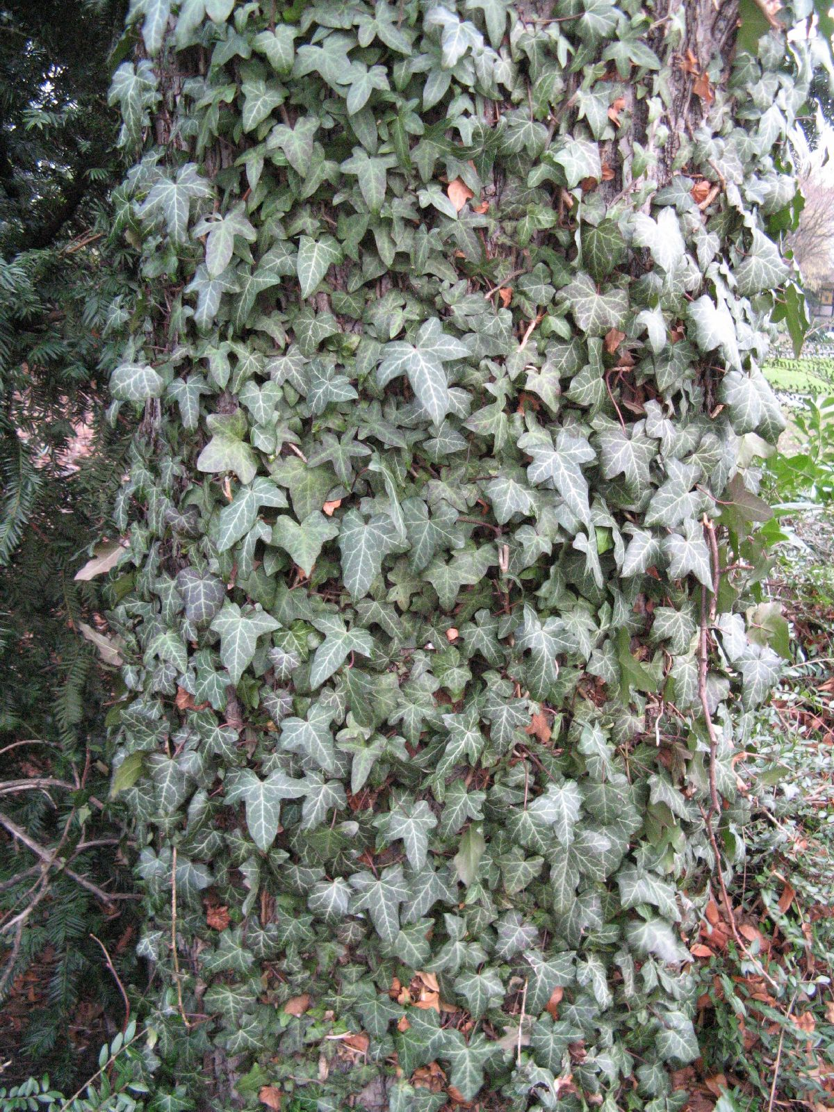 Baum-Rinde_Texturs_B_28660