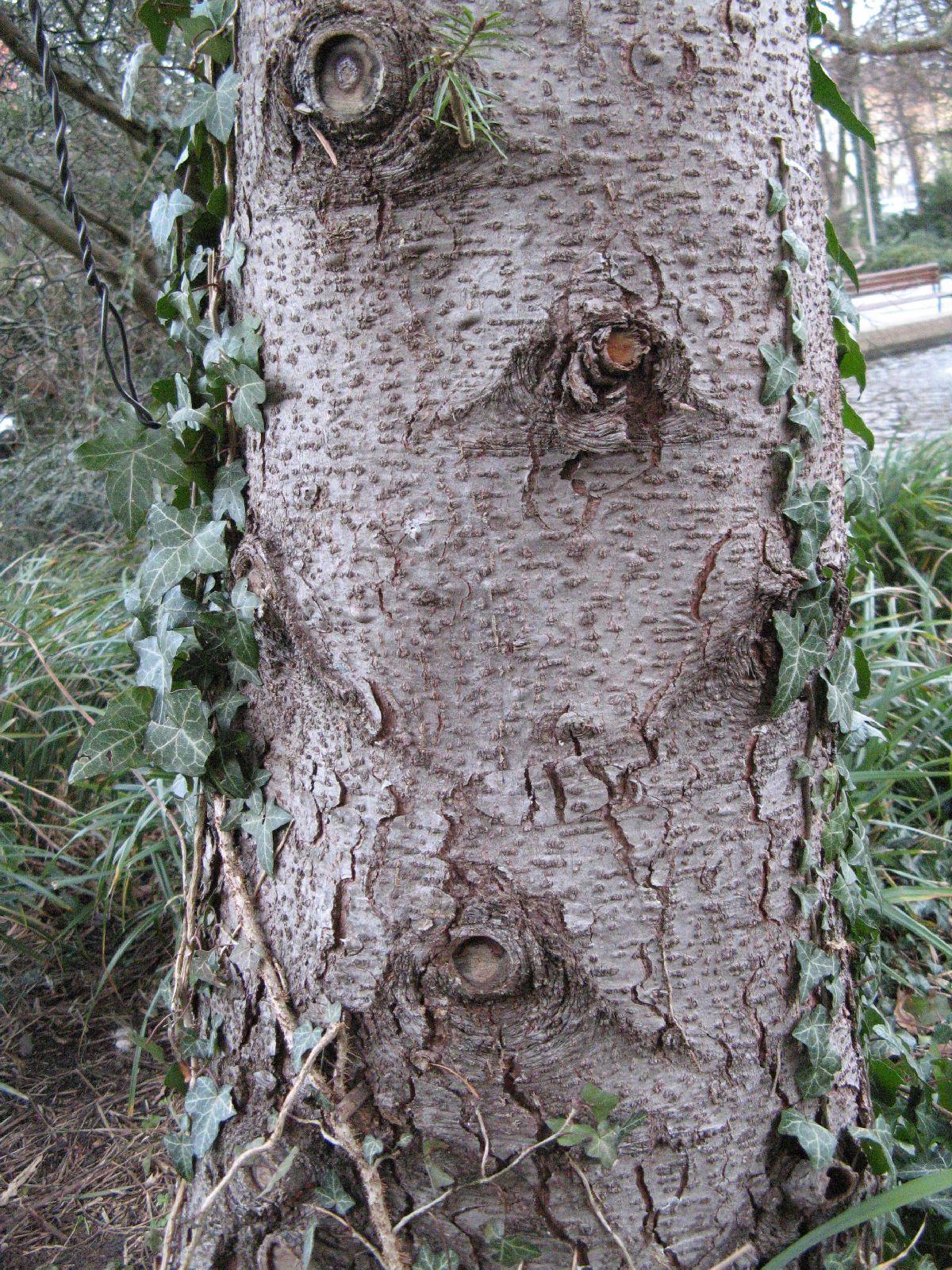 Baum-Rinde_Texturs_B_28700