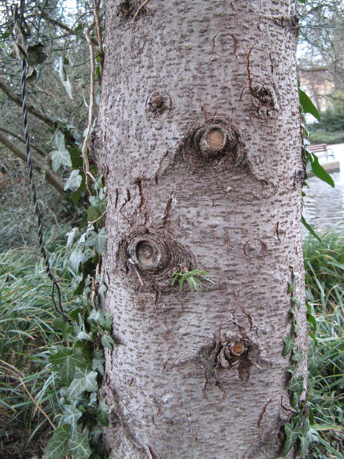 Baum-Rinde_Texturs_B_28710