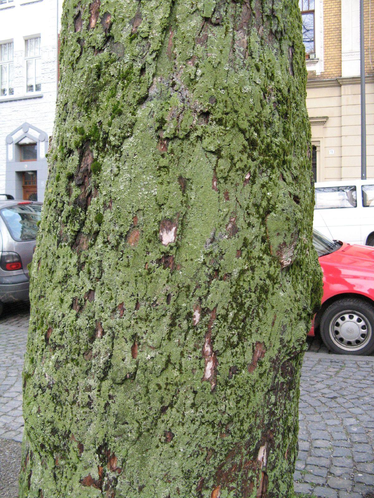 Baum-Rinde_Texturs_B_28930