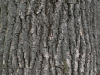 Baum-Rinde_Textur_A_P4120847