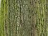 Baum-Rinde_Textur_A_P4131089