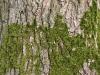 Baum-Rinde_Textur_A_P4201522