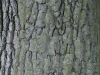 Baum-Rinde_Textur_A_PA035633