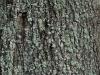Baum-Rinde_Textur_A_PA035639