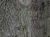 Baum-Rinde_Textur_A_PA035640