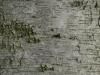 Baum-Rinde_Textur_A_PA035657