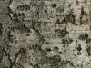 Baum-Rinde_Textur_A_PA035660