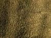 Baum-Rinde_Textur_A_PA256328