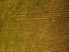 Baum-Rinde_Textur_A_PA256329