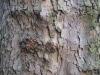 Baum-Rinde_Texturs_B_08920