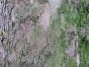 Baum-Rinde_Texturs_B_08930