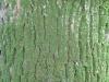 Baum-Rinde_Texturs_B_23810