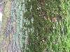 Baum-Rinde_Texturs_B_23830