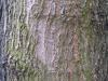 Baum-Rinde_Texturs_B_23840