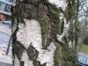 Baum-Rinde_Texturs_B_25670