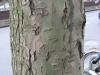 Baum-Rinde_Texturs_B_26320
