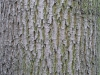 Baum-Rinde_Texturs_B_26770